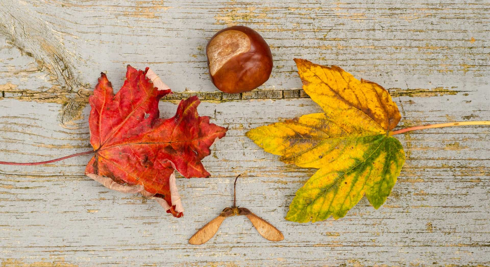 Autumnal touches for your home