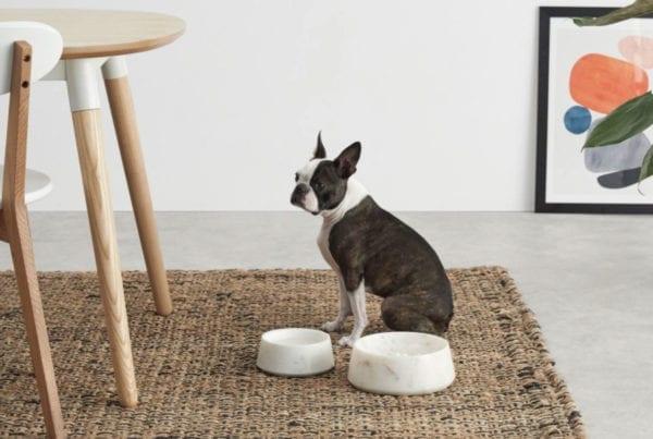 marble dog bowl